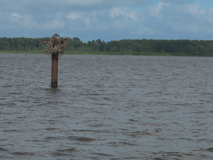 Osprey Nest atop Waterway Marker